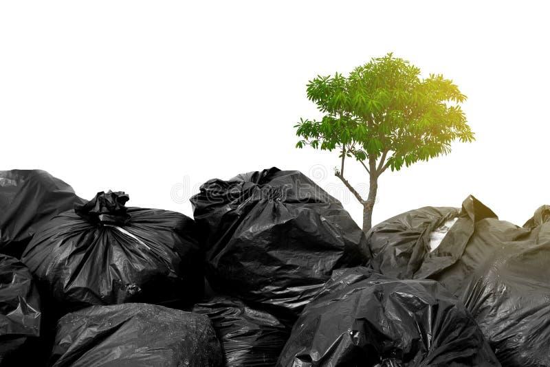 Zwarte vuilniszakken en boom van hoop stock fotografie