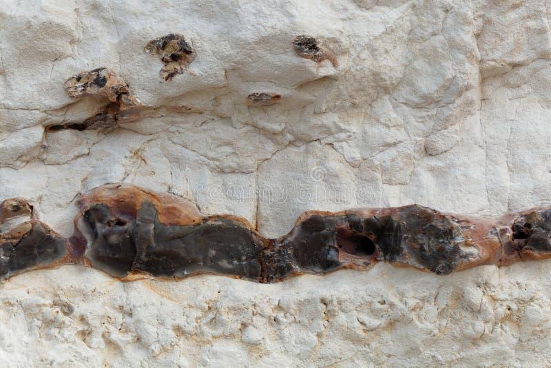 Zwarte vuursteenkiezelstenen in kalksteen van Krijtachtige leeftijd stock foto