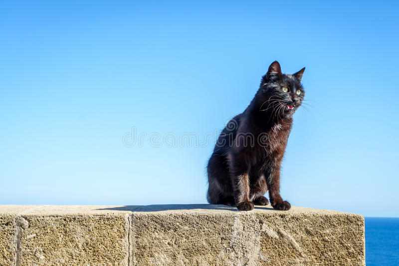 Zwarte wilde kat in Leuca, Puglia, Italië stock afbeelding