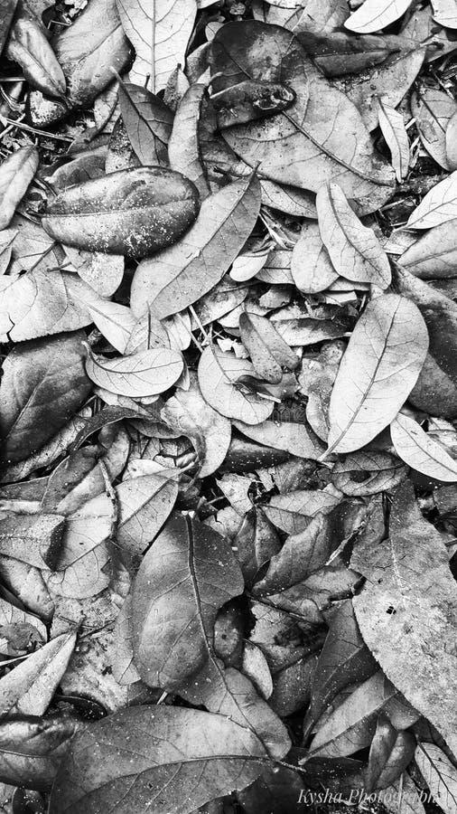 Zwarte & witte bladeren stock foto's