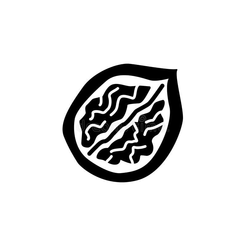 Zwarte & witte vectorillustratie van halve okkernoot met shell fla stock illustratie