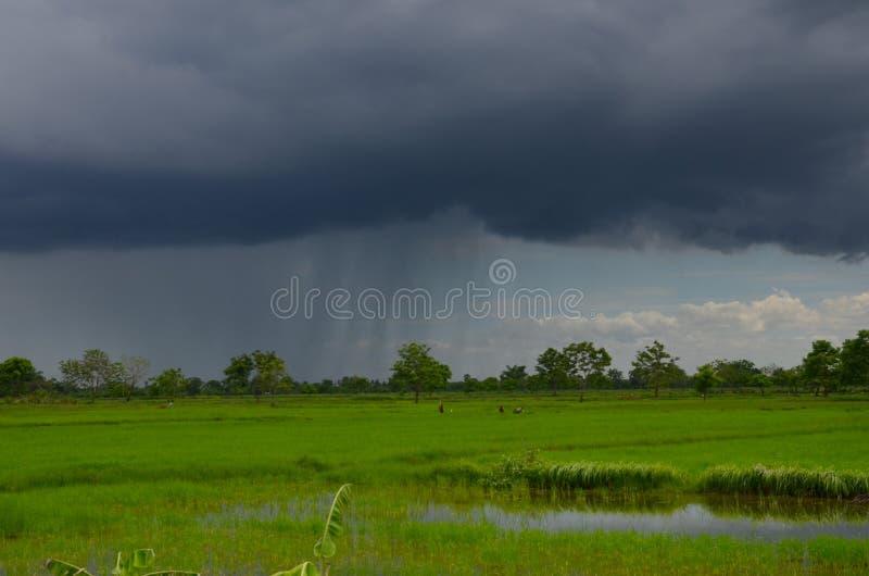 Zwarte wolken en regens over groen padieveld stock foto's