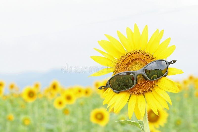 Zwarte zonnebril op de zonnebloem stock foto