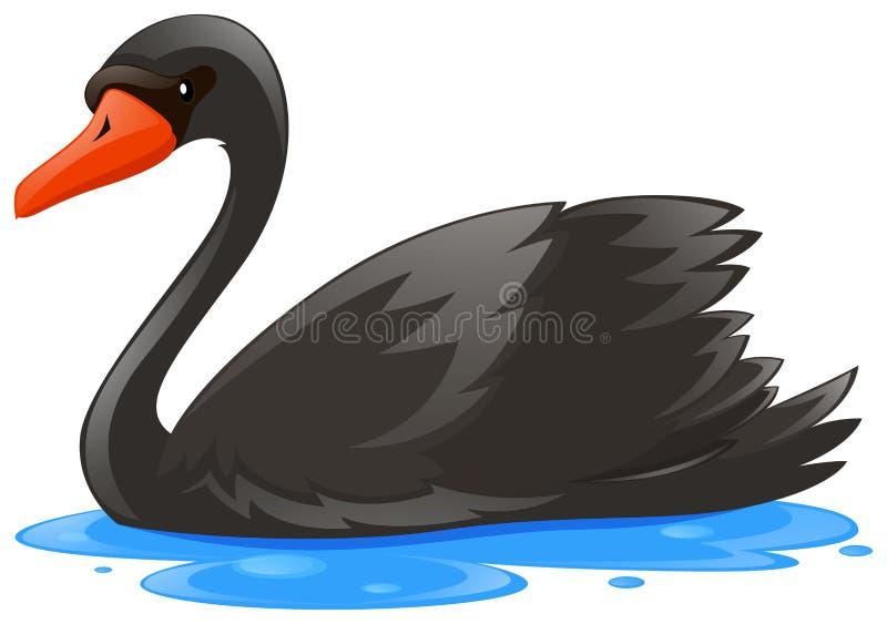 Zwarte zwaan in het water stock illustratie
