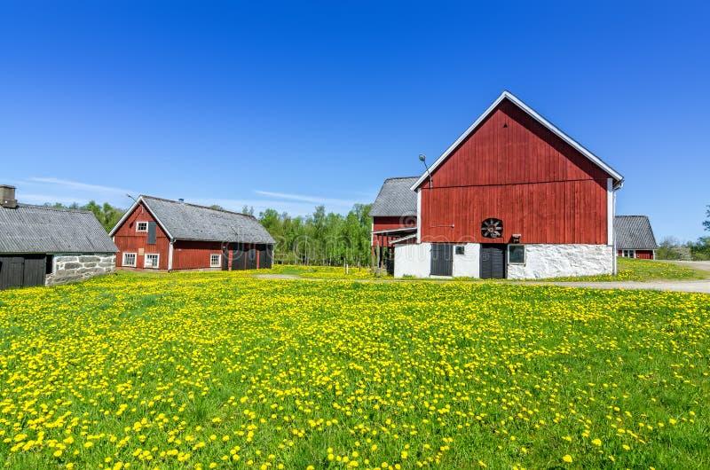 Zweeds landbouwbedrijf in zonnige dag royalty-vrije stock foto