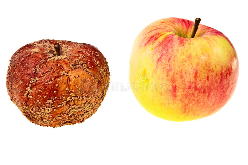 Zwei Äpfel frisch, geschmackvoll und ein faules. stockfotos
