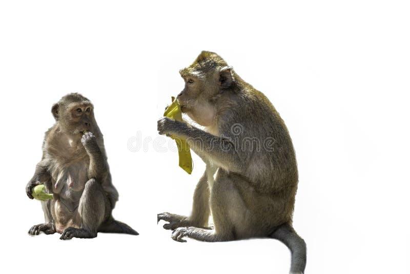 Zwei Affen auf Hintergrund lizenzfreies stockfoto