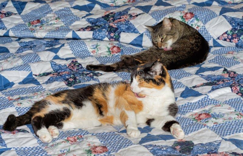 Zwei alte Katzen auf einem Bett, eine braune getigerte Katze und ein Kaliko stockbilder