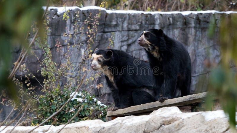 Zwei Bären, die in einem Baum sitzen lizenzfreies stockfoto