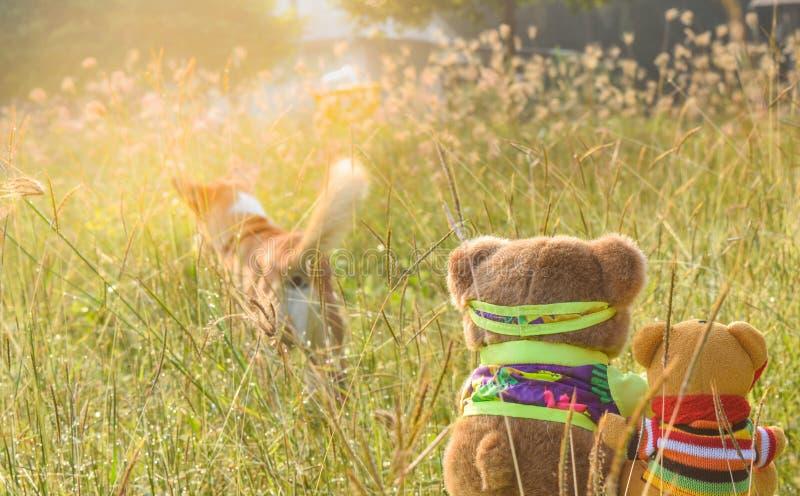 Zwei Bärnpuppen in der Sitzposition am Garten, Blick, wie sie den Hund aufpassen stockfotos