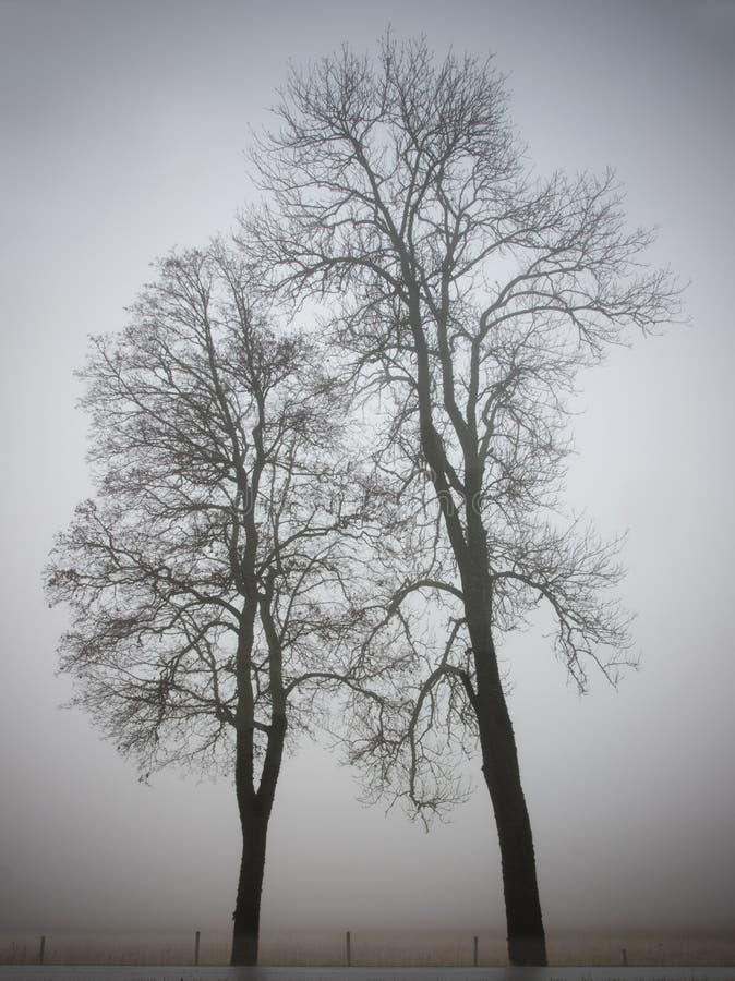 Zwei Bäume stockbild