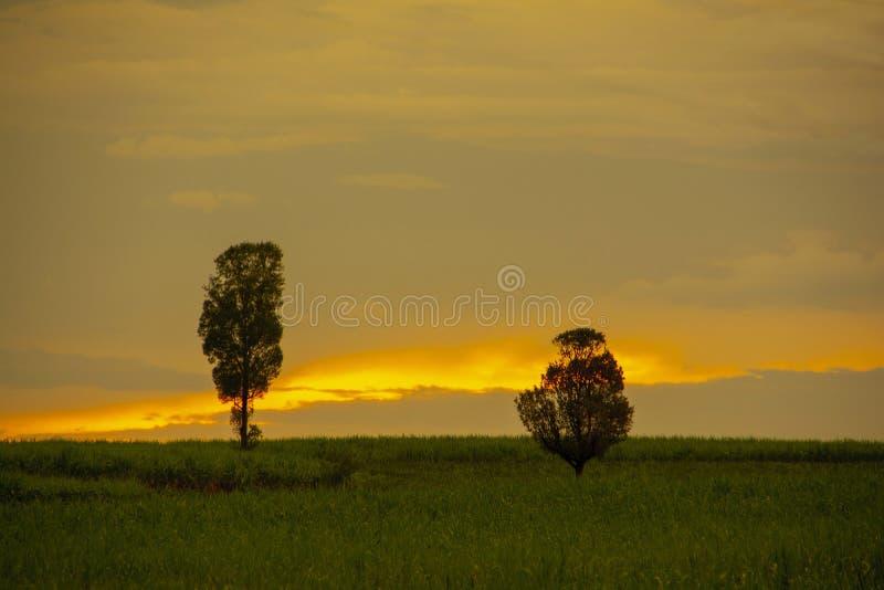 Zwei Bäume auf dem orange Himmelhintergrund stockfotografie
