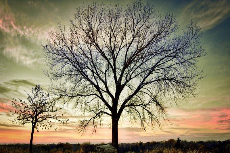 Zwei Bäume an der Spitze des Hügels mit buntem Sonnenuntergang lizenzfreie stockfotos