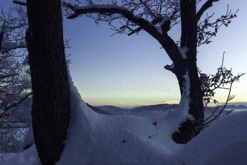 Zwei Bäume an kaltem Freezy-Morgen lizenzfreie stockfotografie