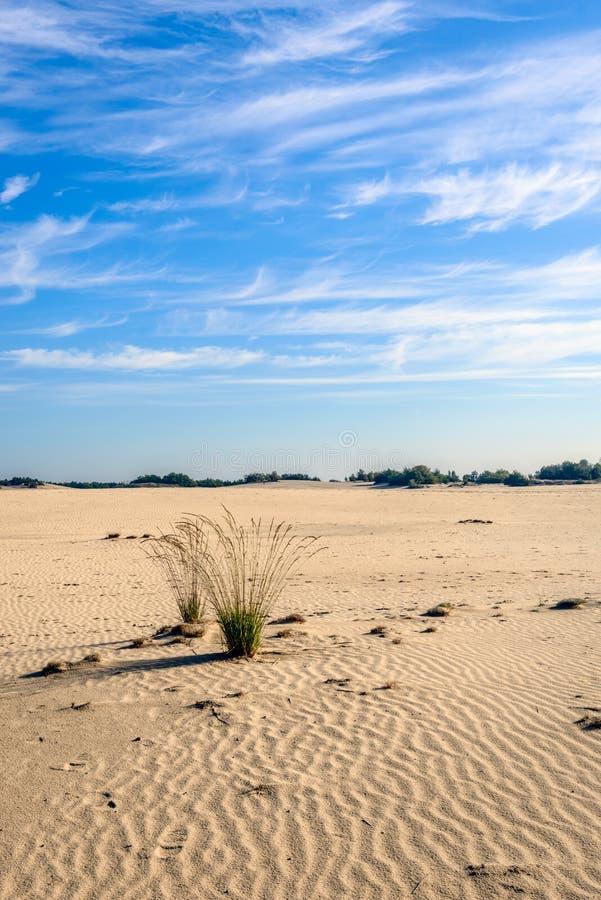 Zwei Büschel Gras in einem desertlike weiten Bereich stockbild