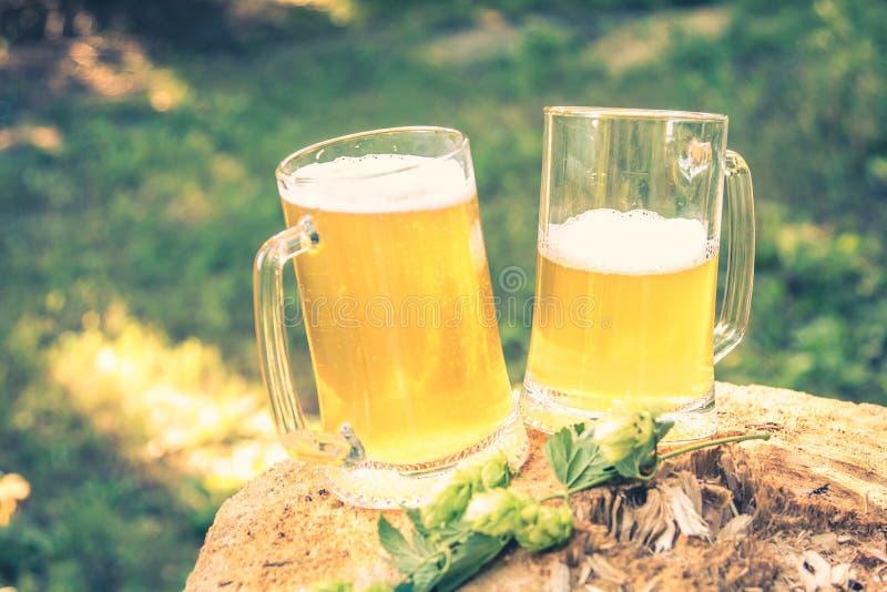 Zwei Becher helles Bier mit Hopfen gegen Hintergrund von den grünen Bäumen im Freien lizenzfreies stockbild