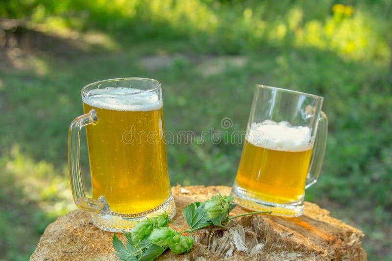 Zwei Becher helles Bier mit Hopfen gegen Hintergrund von den grünen Bäumen im Freien stockfoto