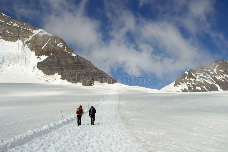 Zwei Bergsteiger, die auf einem schneebedeckten Weg weg von dem Jungfraujoch in der Schweiz wandern stockfotografie