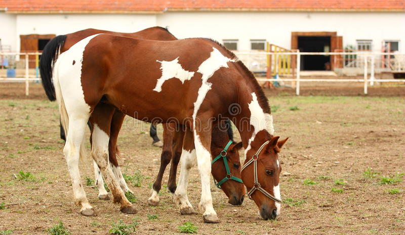 Zwei beschmutzte Pferde lizenzfreie stockbilder
