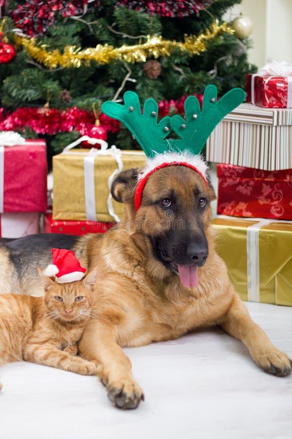 Zwei beste Freunde Hund und Katze in der Heiligen Nacht lizenzfreie stockfotos