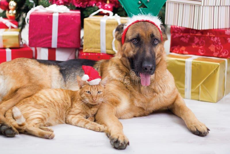 Zwei beste Freunde Hund und Katze in der Heiligen Nacht lizenzfreies stockbild