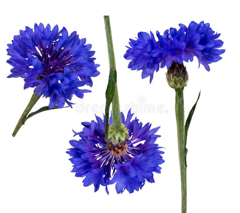 Zwei bezogen sich die salfa Kanaldateien, die durch eine Kornblumeblume in den verschiedenen Winkeln geschnitzt wurden stockfoto