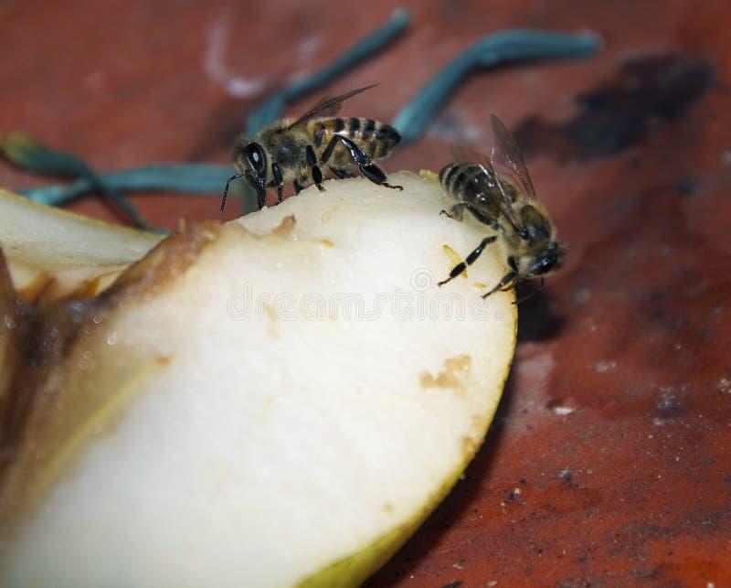 Zwei Bienen lizenzfreie stockfotografie