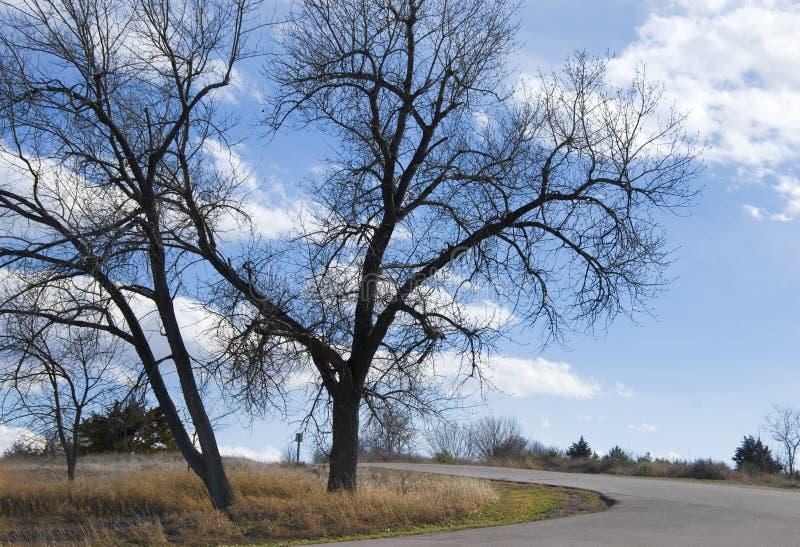 Zwei bloße Bäume durch eine leere Straße lizenzfreies stockbild