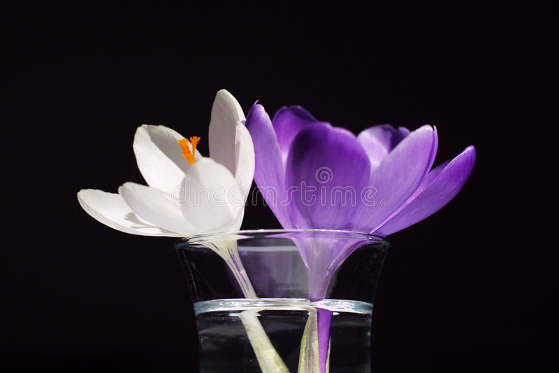 Zwei Blumen Stockbild