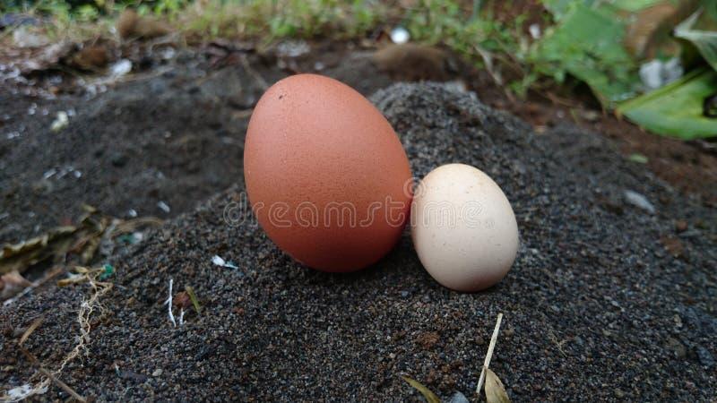 zwei Eier braun und weiß im Sand stockfoto