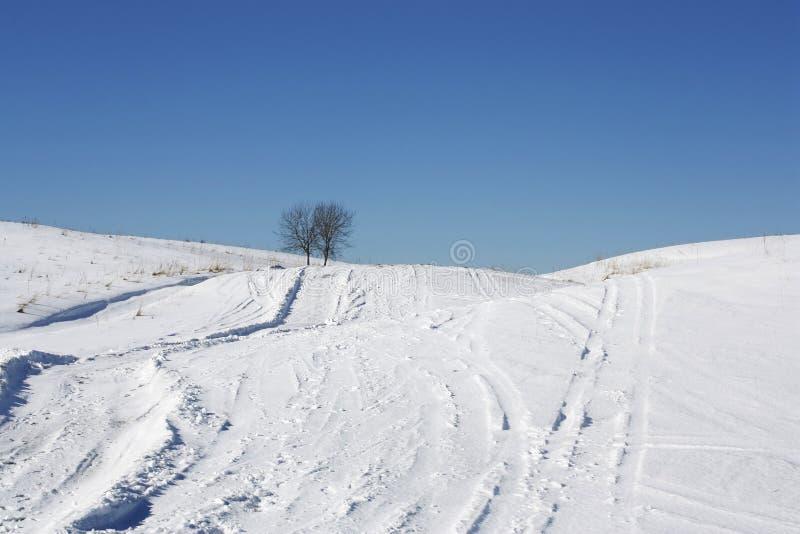 Zwei einsame Bäume auf schneebedecktem Hügel am vollen Tag stockbilder