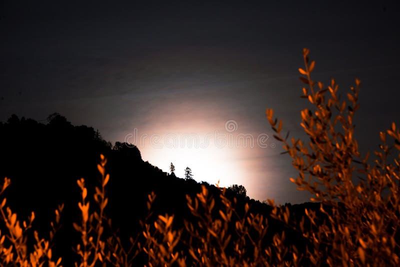 Zwei einsame Bäume in der Nacht stockbild