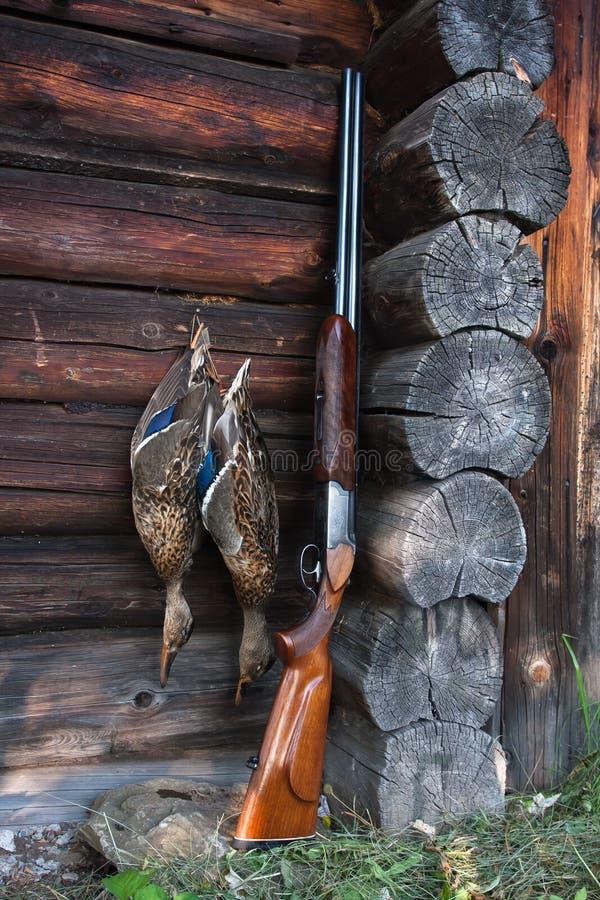 Zwei Enten und Schrotflinte auf der hölzernen Wand lizenzfreies stockfoto