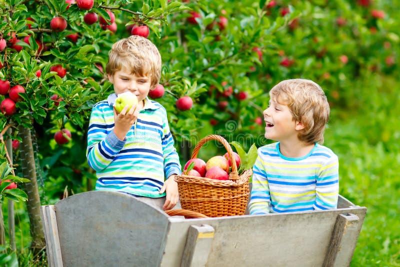 Zwei entzückende glückliche Kleinkindjungen, die draußen rote Äpfel auf Biohof, Herbst auswählen und essen Lustiges kleines lizenzfreies stockbild