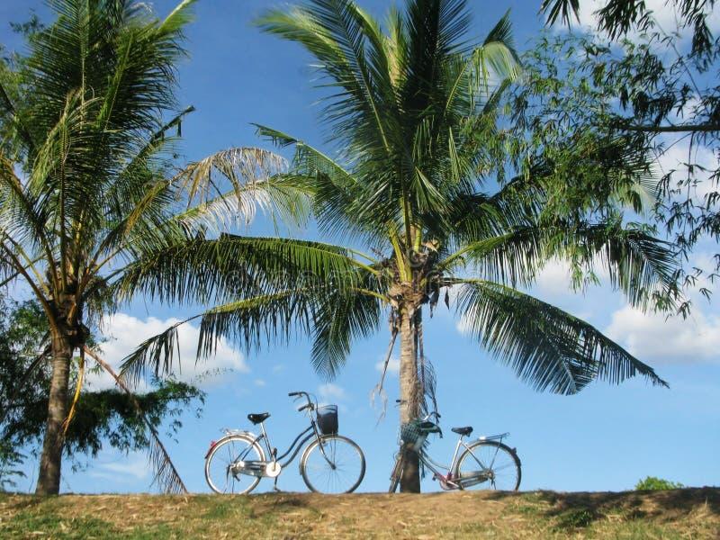 Zwei Fahrräder unter Palmen stockbilder