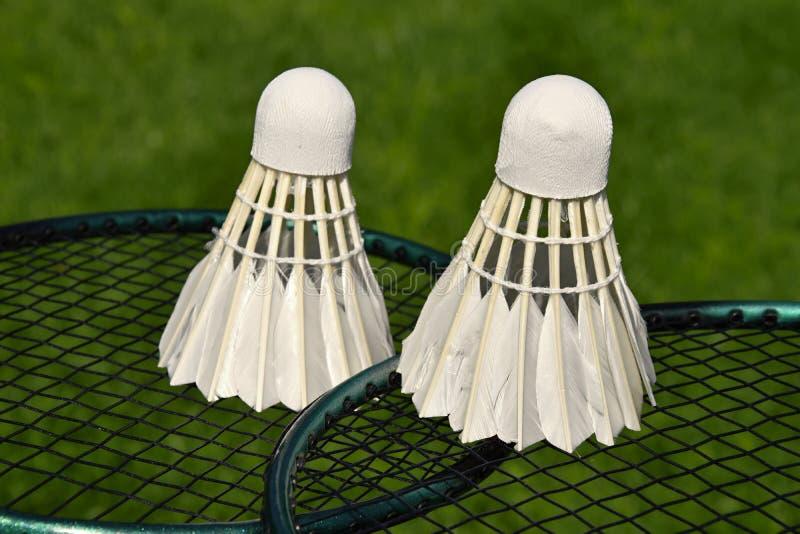 Zwei Federbälle auf Schläger draußen auf grünem Gras kurz vor Badmintonspiel stockfotos