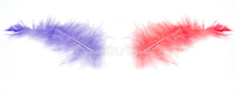 Download Zwei Federn stockbild. Bild von tiere, flaumig, flug, zweige - 31745