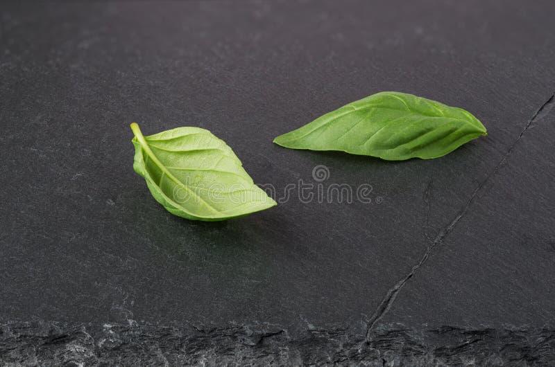 Zwei frische grüne Basilikumblätter lizenzfreie stockbilder