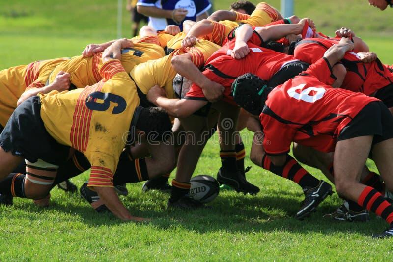 Zwei gegenüberliegende Rugbyteams packen hinunter ein Gedränge, während die Kugel innen gesetzt wird stockbild