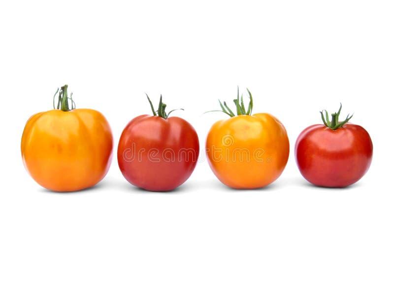 Zwei gelbe und zwei rote Tomaten stockfoto