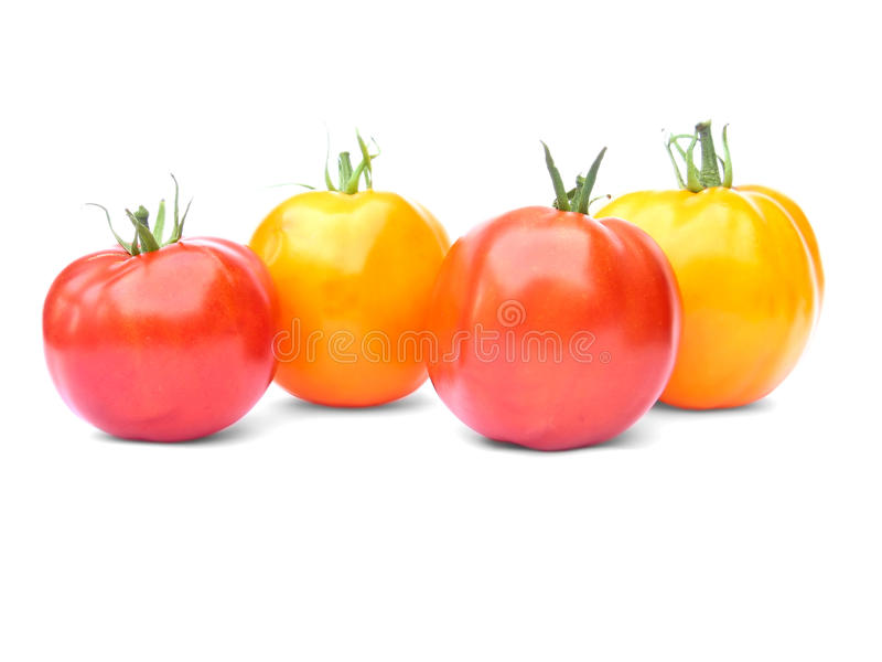 Zwei gelbe und zwei rote Tomaten lizenzfreies stockbild