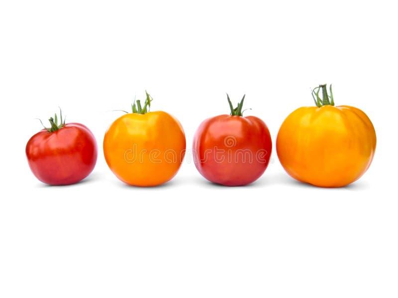 Zwei gelbe und zwei rote Tomaten lizenzfreie stockbilder