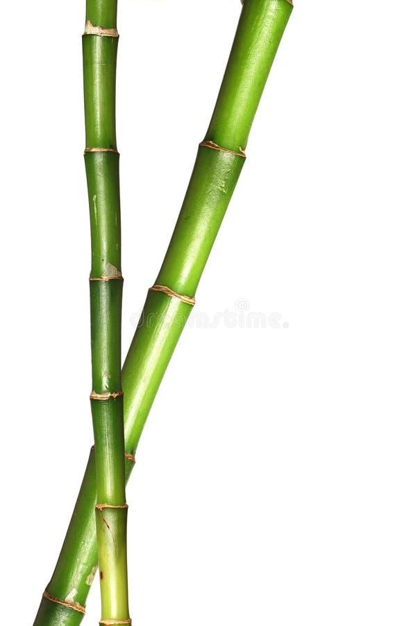 Zwei glückliche Bambusstämme lizenzfreies stockbild