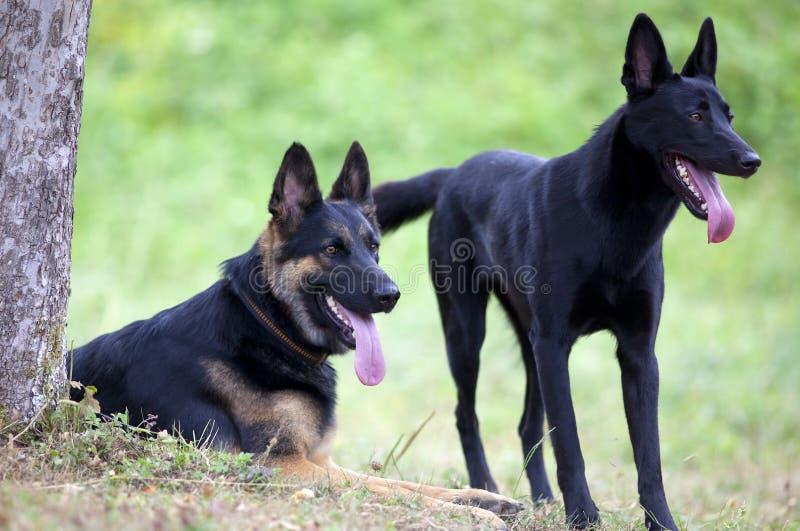 Zwei glückliche Hundefreunde draußen lizenzfreie stockfotografie