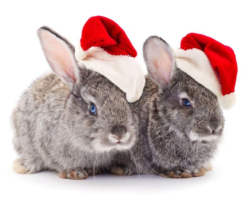 Zwei graue Kaninchen in einem Santa Claus-Hut lokalisiert stockbild