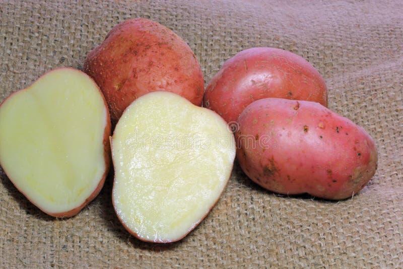 Zwei Hälften von roten Kartoffeln des Schnittes auf Leinwand. lizenzfreies stockbild