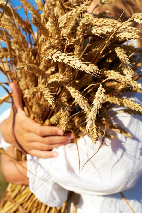 Zwei Hände, die goldene Weizenspitzen auf Feld halten lizenzfreie stockfotos