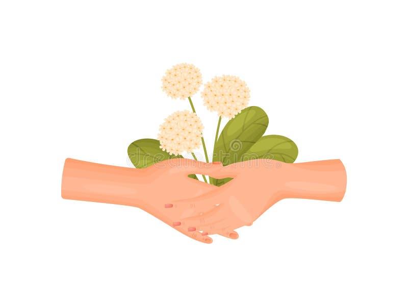 Zwei Hände halten einen Blumenstrauß von üppigen Blütenständen und von Blättern Vektorabbildung auf wei?em Hintergrund vektor abbildung