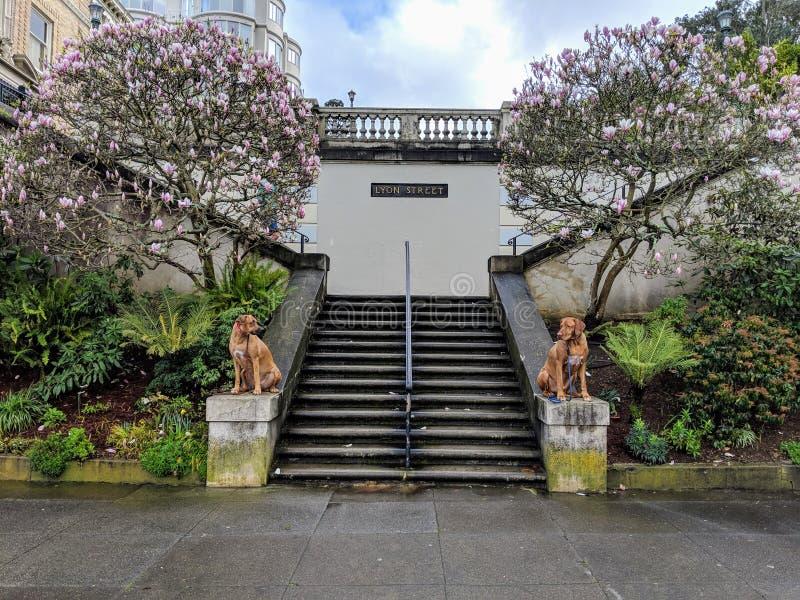 Zwei hübsche schöne Hunde, die auf Steinschritten als Wächter betrachten einander mit blühenden Magnolien im Hintergrund aufwerfe lizenzfreie stockfotos