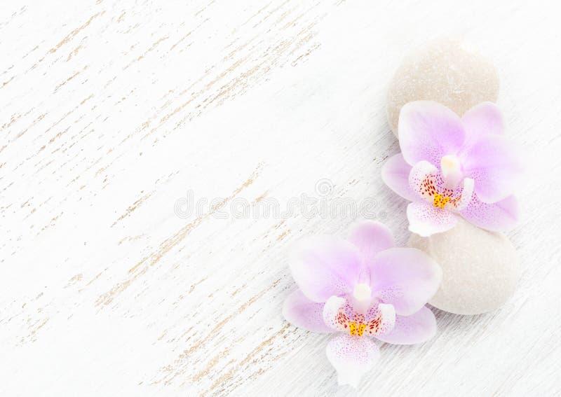 Zwei hellrosa Orchideen und Steine auf hölzernem schäbigem Hintergrund lizenzfreie stockbilder